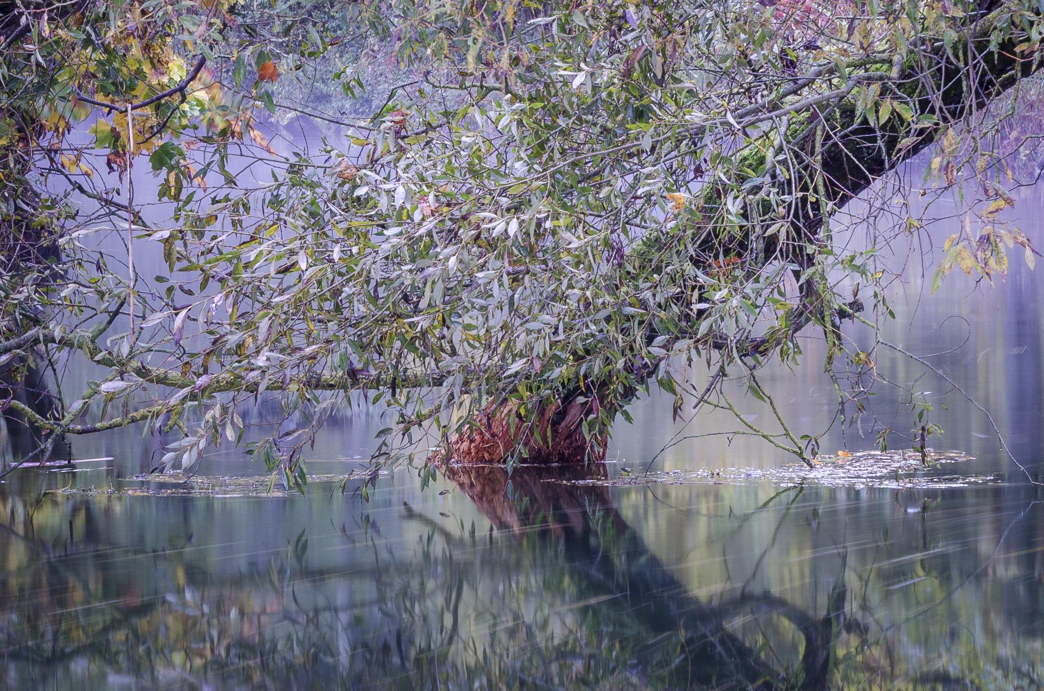 Concours photo «Au fil de l'eau»